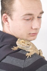 Protecting Yourself from Salmonella with Bearded Dragons