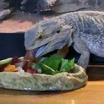 Have Food Readily Available for Your New Bearded Dragon