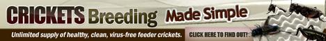 Crickets Breeding Made Simple