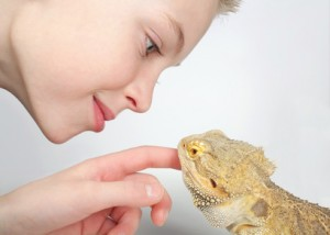 Taming a Bearded Dragon
